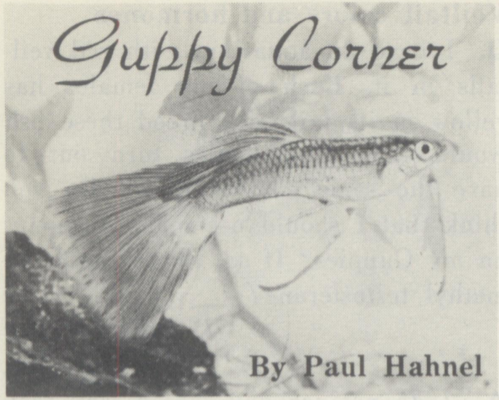 IGEES Guppy History Project: Shaddock and Hahnel